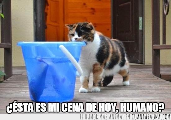 agua,cena,comida,cubeta,cubo,gato,humano,peces