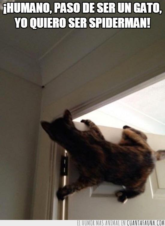 araña,como se pille los dedos...,gato,humano,puerta,trepar