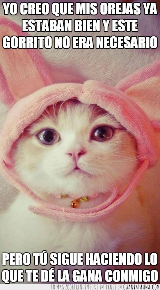 blanco,cascabel,cat,conejo,disfraz,Gato,monada,ojos,orejas,rabbit,rosa