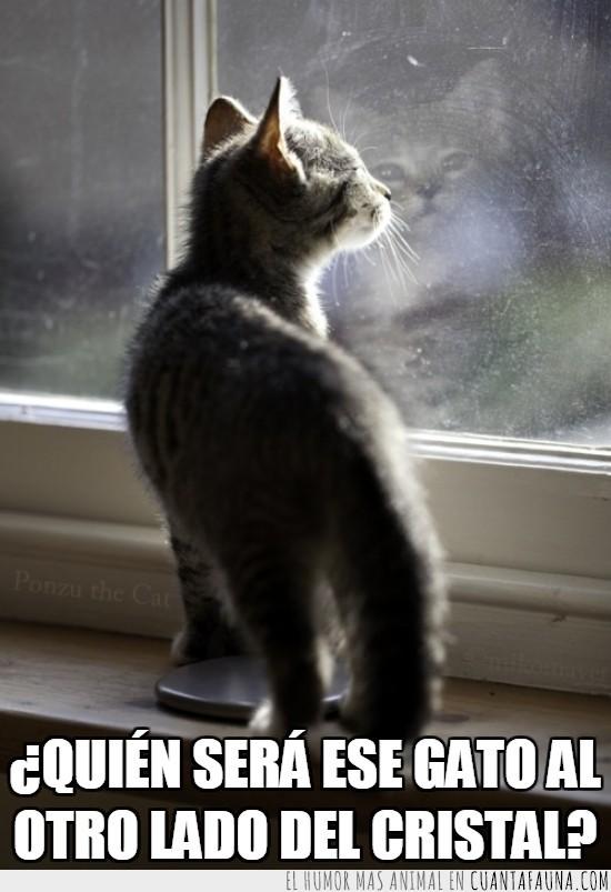 cara,cría,cristal,curiosidad,cute,espalda,frente,Gato,monada,reflejo