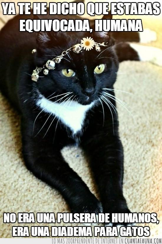 cascabeles,estilo,flor,frente,Gato,margarita,mejor,negro,ojos,pulsera,suerte