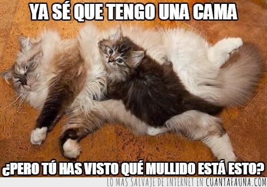 alfombra felina,derechos,encima,gato,gatunos,humano,inmovil