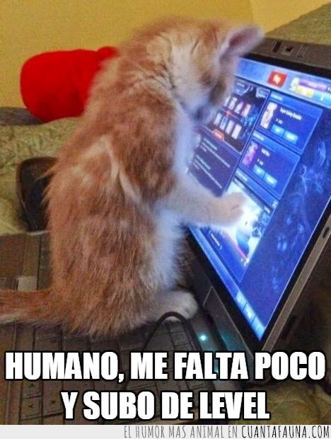 gato,juegos,jugar,ordenador,portatil,videojuego