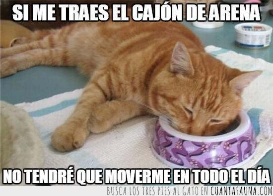 cara en el plato,dormir,gato,humano,jugar,sueño,vago