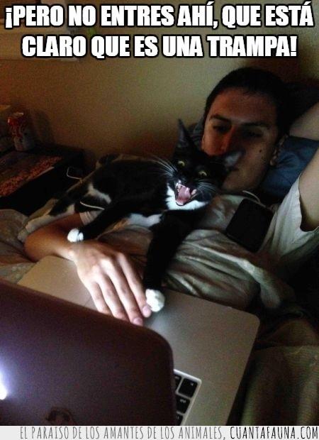 gato,humano,miedo,película,programa,terror