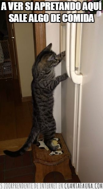 abrir,comida,frigorifico,gato,humano,jugar,nevera,puerta