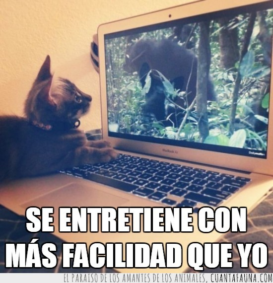 gato,jugar,laptop,maquina,noticias,portatil