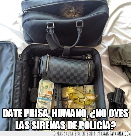 agente secreto o algo,armas,bolsa,bolso,botín,dinero,esconderse,gato,humno