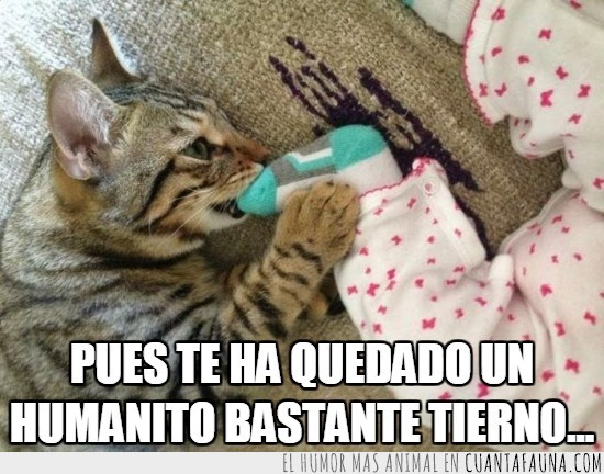 bebe,gato,humano,jugar,morder,niño,pata
