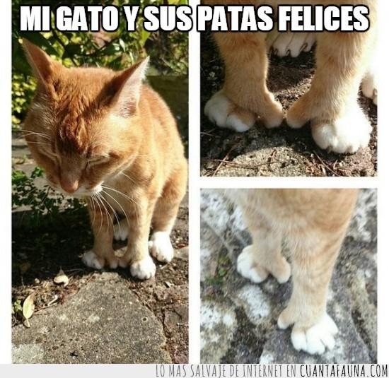 caminar,curiosas,dedos raros,felices,gato,humano,pata