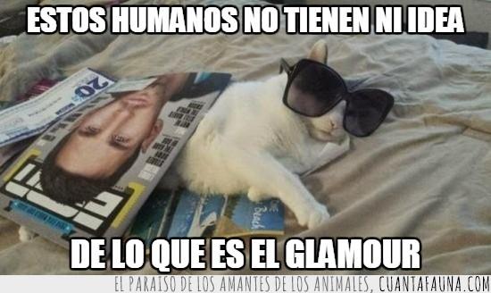 cama,gato,gatuno,humano,jugar,revistas