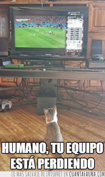 curioso,equipo,futbol,gato,gatuno,humano,mando de la nintendo 64,mirar,perder