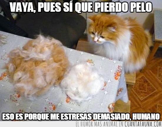 bola de pelo,gato,gatuno,humano,pelo,pelusa