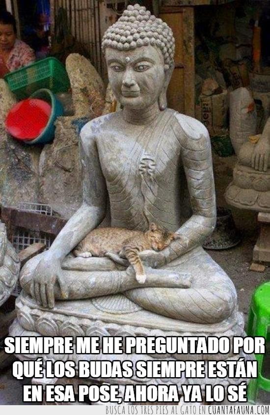 acostado,buda,dormir,gato,gatuno,humano,paz,regazo