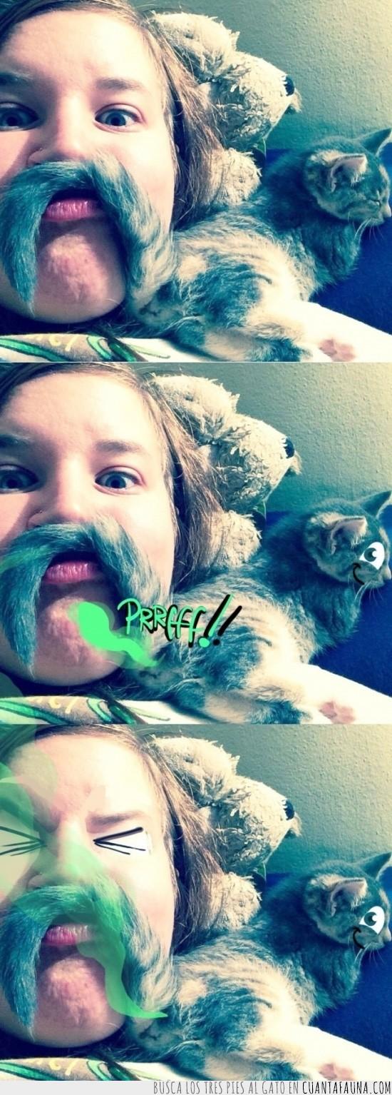 bigote,gas,gato,inteligente,lo puedes pagar,pedo