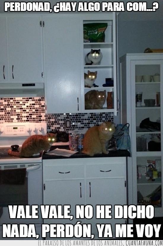 cocina,comida,gato,miedo,mirada,ya me voy