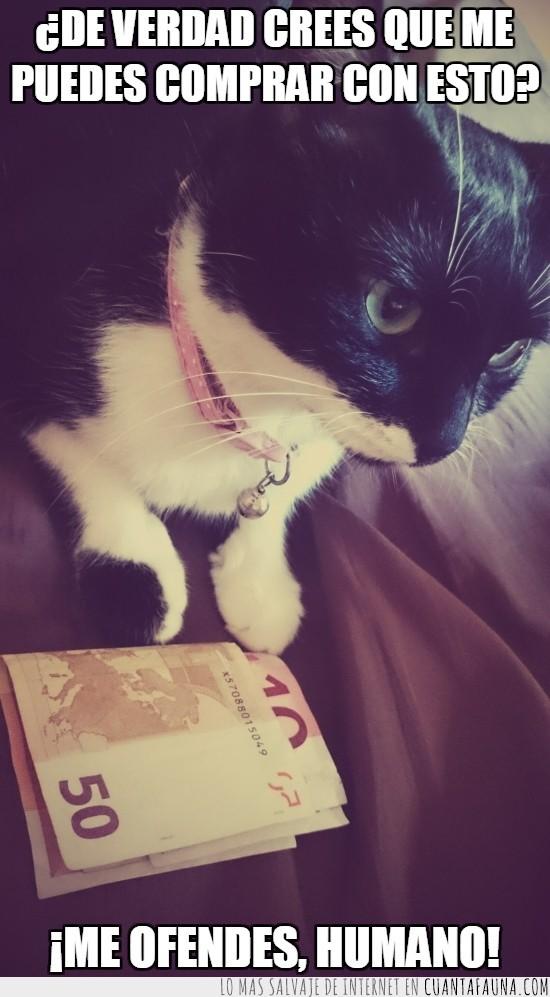 60 euros,comprar,dinero,enfadado,gato,no es suficiente,ofender,sobornar