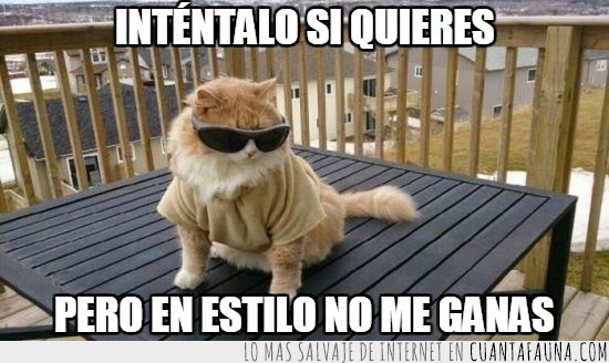 camiseta,foto,gafas de sol,gato,gatuno,humano,patio,silla