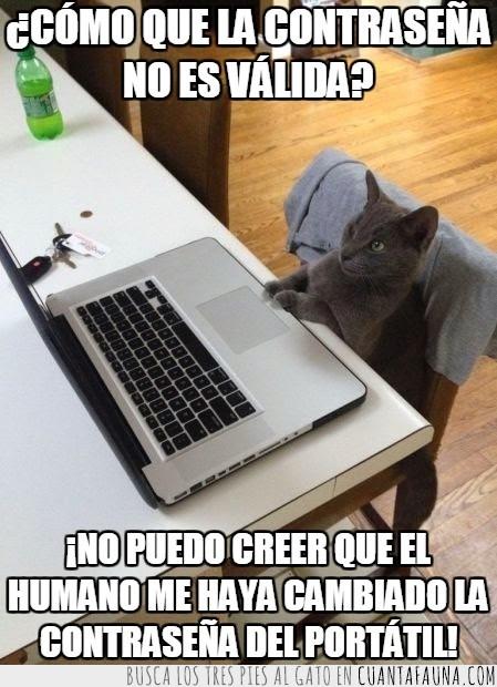 cambiar,contraseña,gato,gatuno,humano,mirar,ordenador,portatil