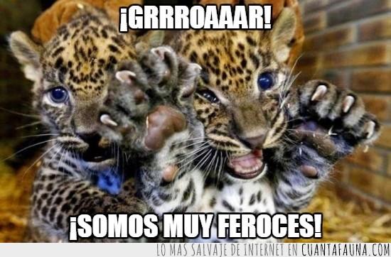bebes,cachorros,fotos,gato,gatuno,humano,leopardo,tigre