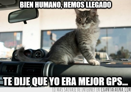 coche,gatito,gato,gps,llegar,salpicadero