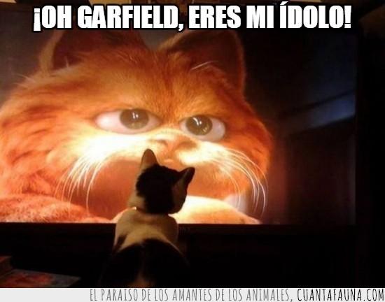 garfield,gato,humano,idolo,jugar,mirar,pantalla,programa,tele,televisor