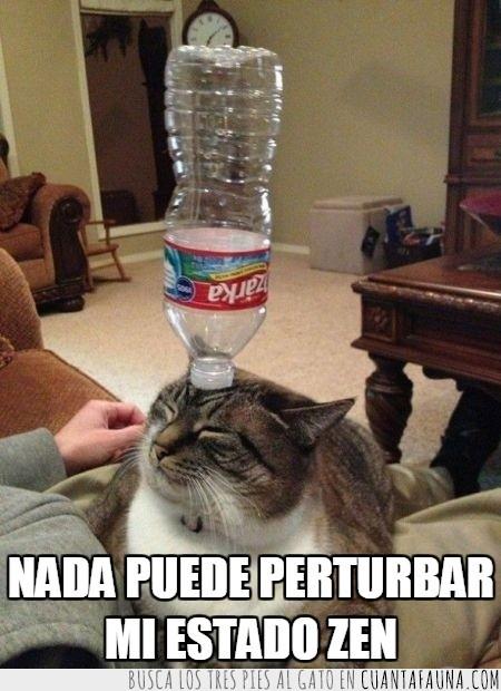 botella,equilibrio,gato,gatuno,humano,jugar