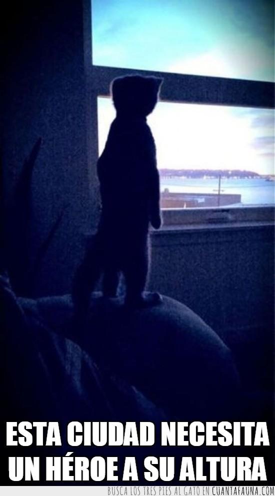 a su altura,ciudad,gato,heroe,jugar,mirar,patas,ventana