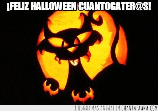 calabaza,gato,Halloween,iluminación,luz,negro,terror