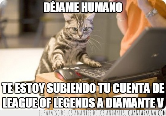diamante,diamante 5,gamer,gato,jugar,league of legends,lol,ordenador,pc,portatil