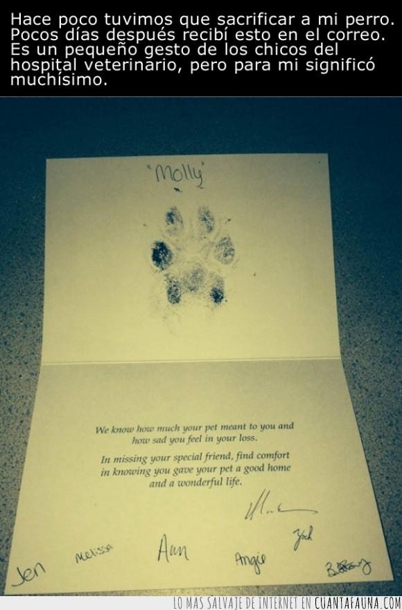 carta,emotivo,hospital,mascota,molly,perrete,perro,postal,recibir,sacrificar