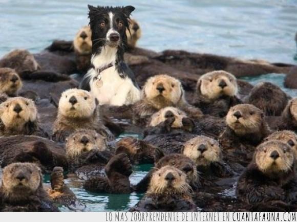 agua,barro,can,castores,humor,lodo,perro