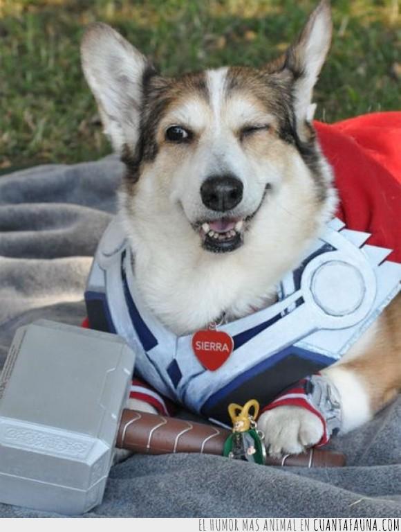 cosplay,disfraz,guiñar,ojo,perro,sierra,thor