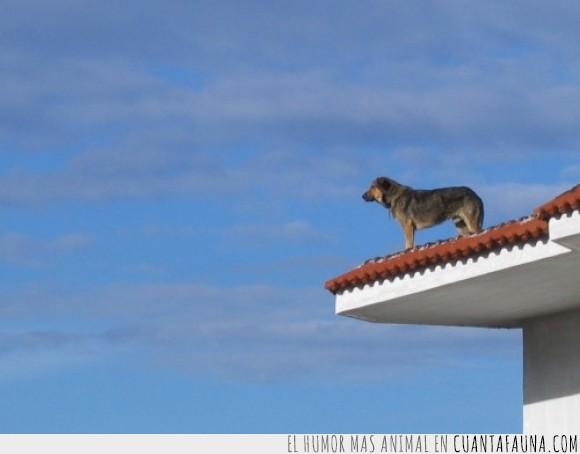 casa,ciudad,heroe,perro,tejado