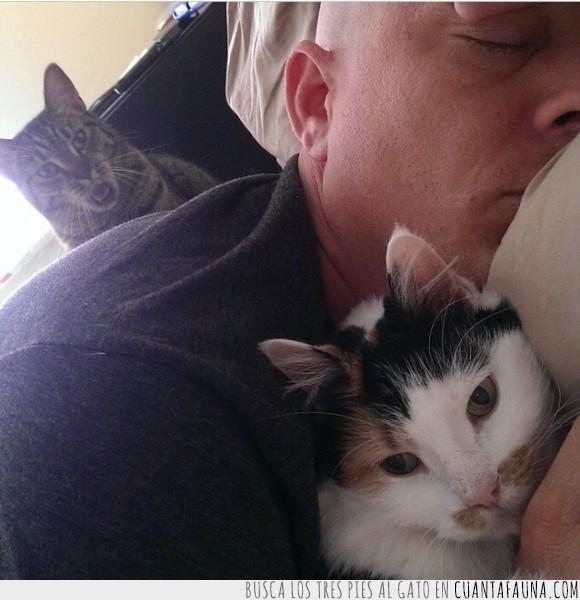 calvo,cuernos,dormir,Es Bruce Willis fijo,gata,gato,mercedes
