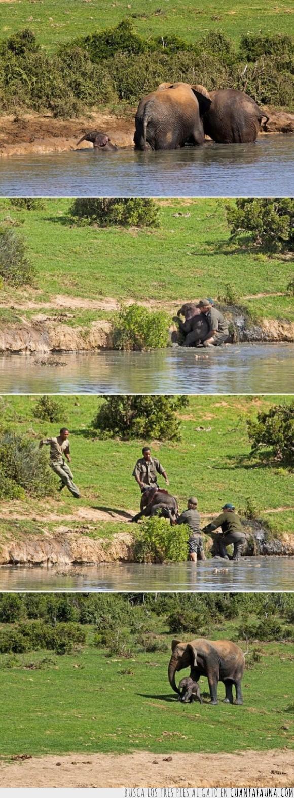 agua,ayudar,charca,dumbo,elefante,hijo,lago,madre,pequeño,sacar,salir