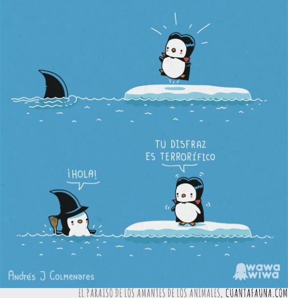 ártico,oceano,orca,orca que parece bruja,pingüino bruja,pingüino vampiro,pingüinos,polo sur