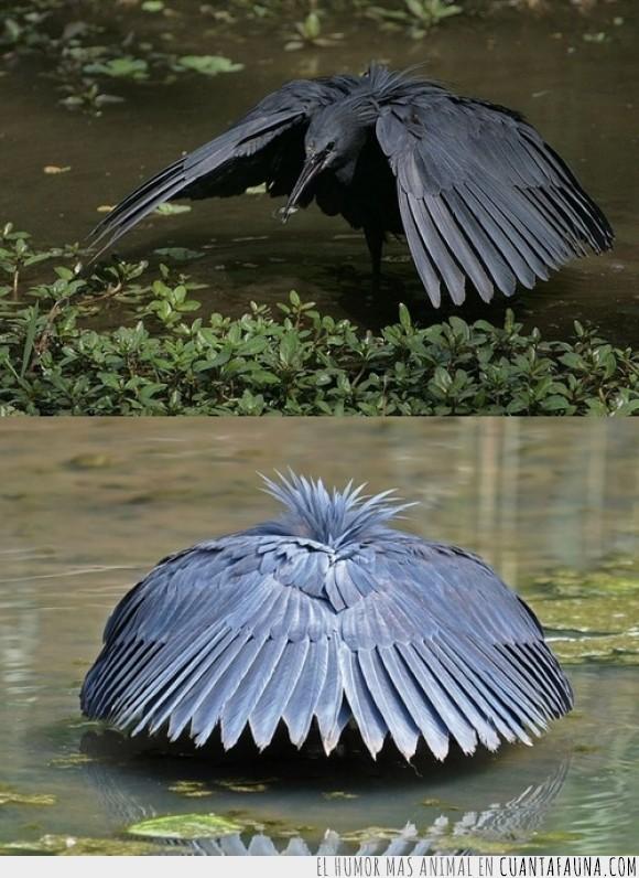 ave,comer,crear,esconder,negra,negro,parece un cuervo,pez,roca,sombra,venid a mi