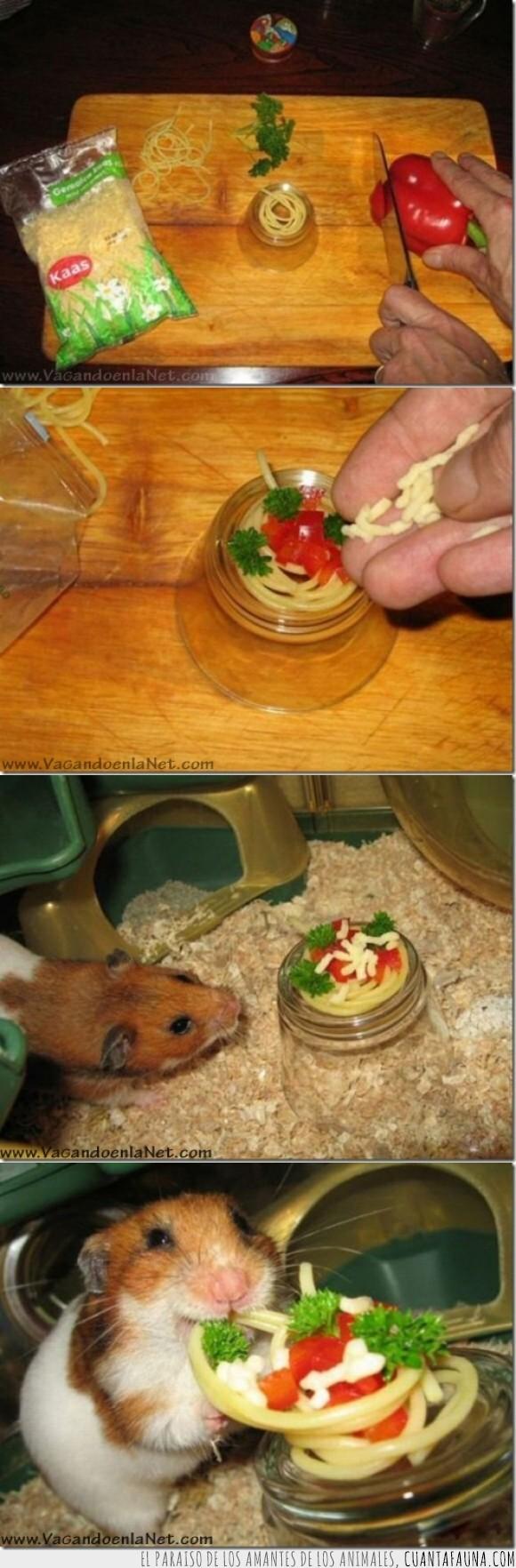 amistad,consentir,espagueti,hamster,mascota,pasta,plato,regalo