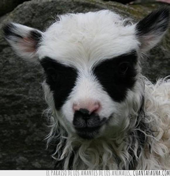 17826 - OVEJAS NORUEGAS - 50% de oveja y 50% de puro black metal
