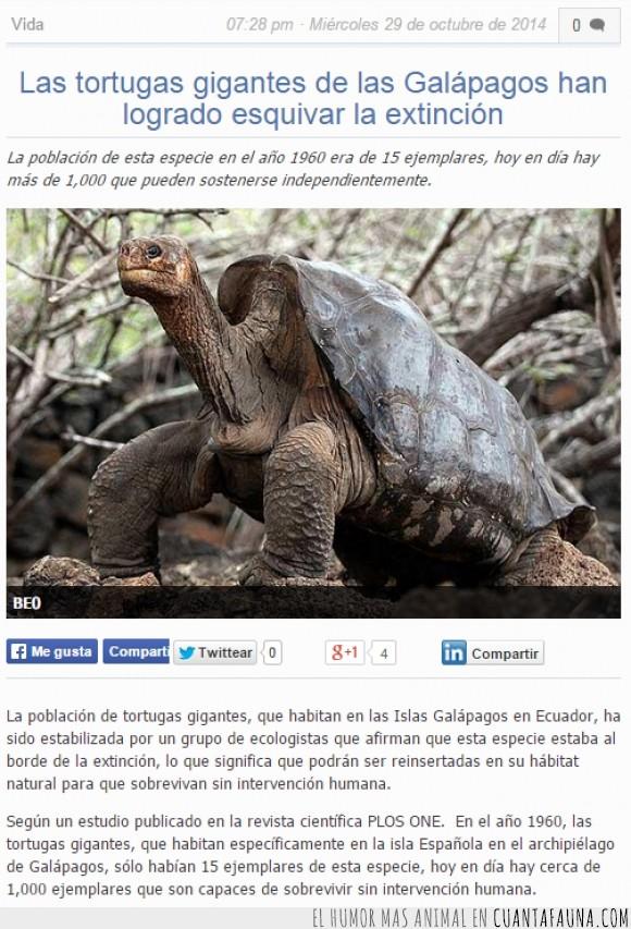 ambiente,buena,esquivar,extinción,galápagos,isla,noticia,superviviencia,tortuga