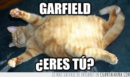 garfield,gato,gordo,obeso,real,tumbado