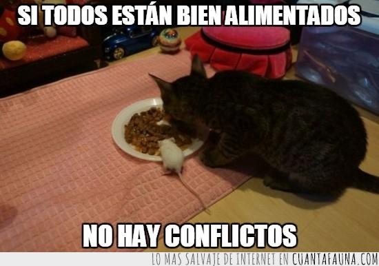 amigos,comer,comida,conflictos,gato,rata,ratón humano