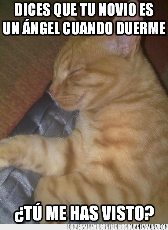 cojín,dormir,gato,Pepper,sonrisa