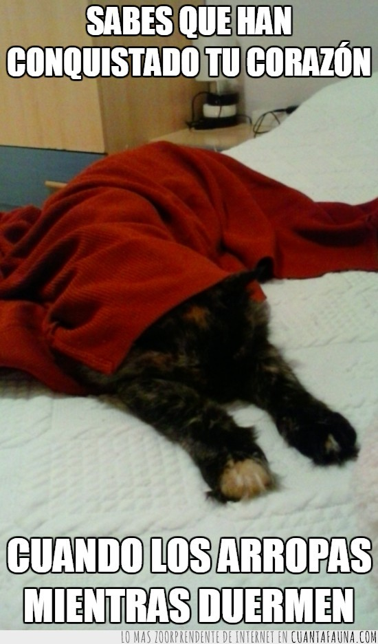 cama,dormir,gata,llega el frío,mantita,tapar