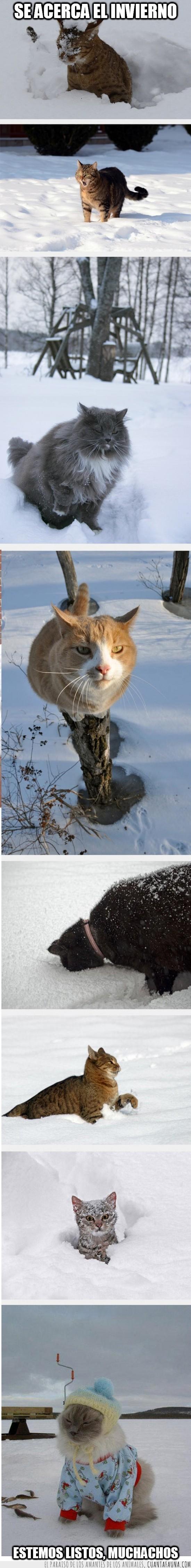 gato,graciosos,invierno,nieve,ropa