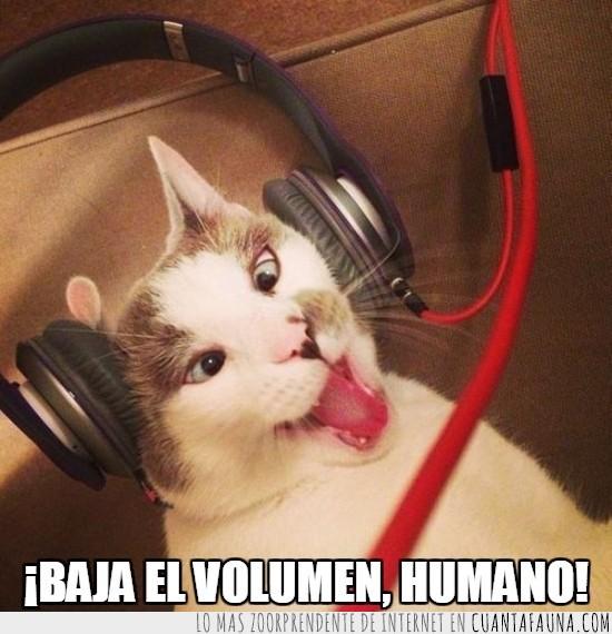 auriculares,gato,humano,música,radio,tendrían que hacer cascos para gatos,volumen