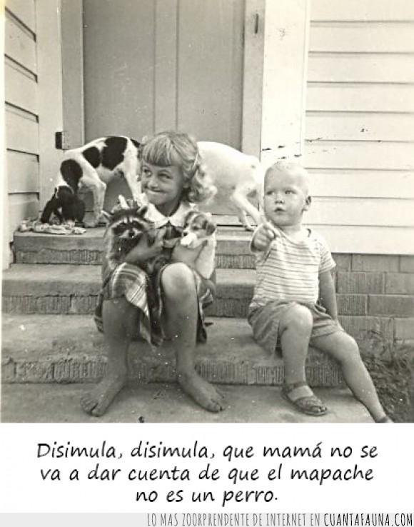 disimular,el niño la delata,en serio que quieres que te diga,la madre del canino americano tuvo una noche loca,mapache,niños,perro,que quieres que te diga
