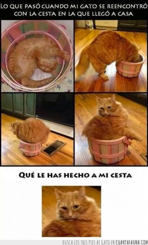 cesta,crecer,dentro,encoger,gato,grande,meter,pequeña,pequeño