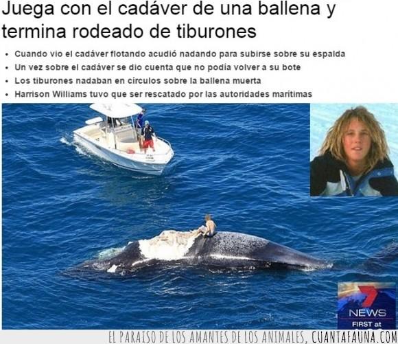 ballena,cadaver,niño,salvamento,salvar,subir,tiburones